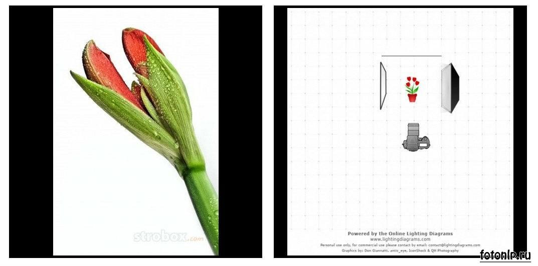 Схемы света для фотосессии в фотостудии - Фото №1011
