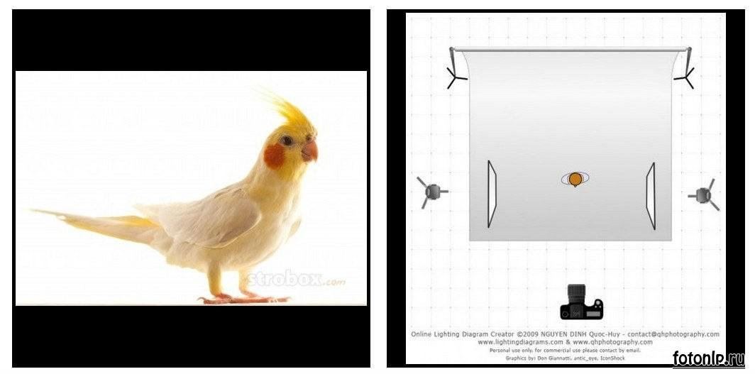 Схемы света для фотосессии в фотостудии - Фото №979